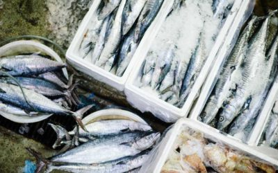 Fishing company Terrasan nets private equity deal