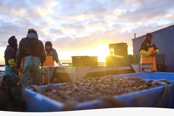 terrasan-blue-ocean-mussels-image-2