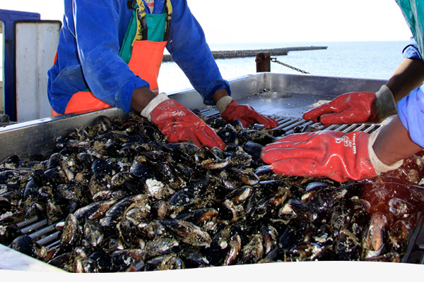 terrasan-imbaza-mussels-image-2
